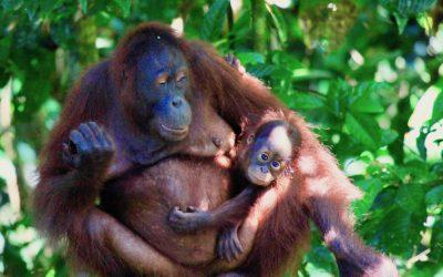 Grüne Taten, die den Regenwald retten können – Ideen von OroVerde