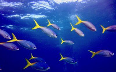 Schutz der Meere – eine Einführung